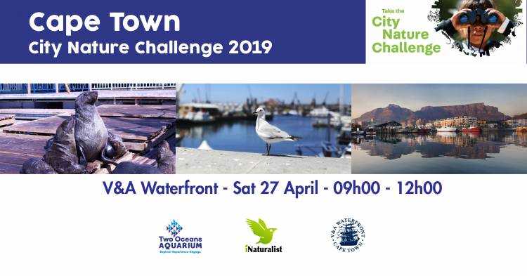 The City Nature Challenge 2019 is coming to Cape Town! Join a bioblitz near you!