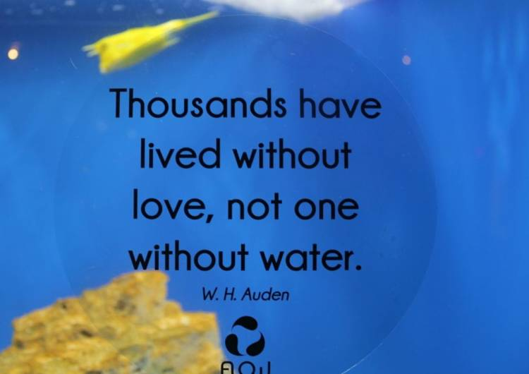 Water A Source Of Inspiration Blog Two Oceans Aquarium Cape Classy Water Quotes