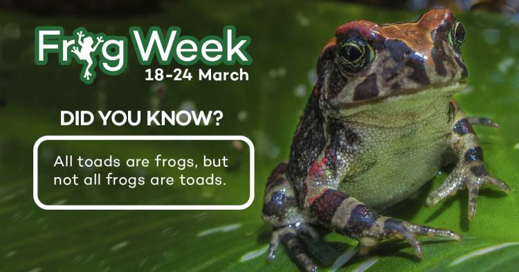 2ff7d796b83fd Frog Week! 18 to 24 March in Cape Town