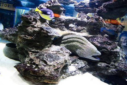 An angle on eels blog two oceans aquarium cape town for Aquarium angle