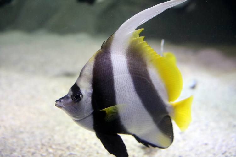 New Home For Poorman S Moorish Idol Meet The Coachman Blog