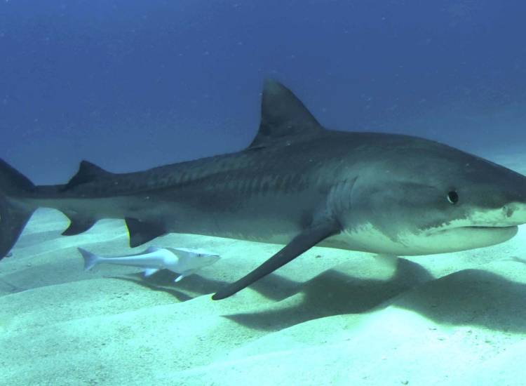 Everything you've ever wanted to know about sharks in South
