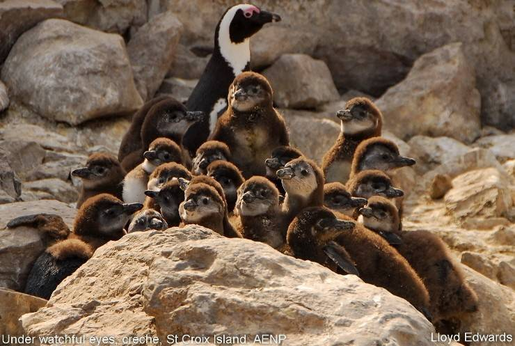 How well do you know penguins? Here are the answers to the ...
