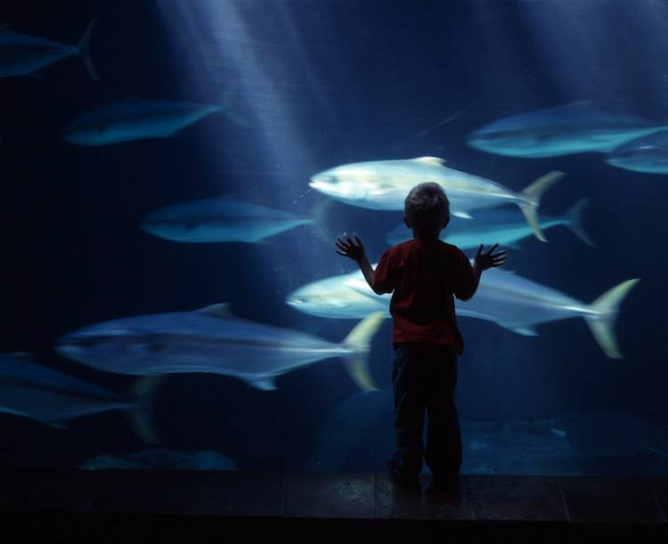little boy with fish Two Oceans Aquarium