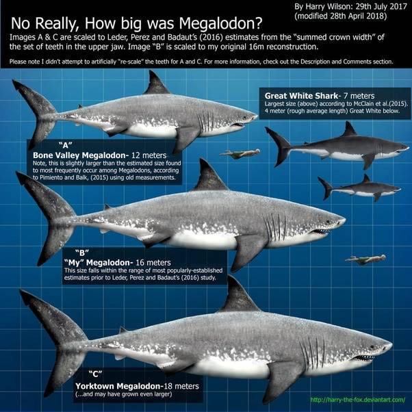 megalodon the real facts about the largest shark