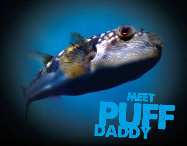 Muddy waters fish found tampering with sea lection for Fish daddy s