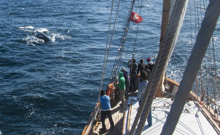 Free members' event: Ocean Mapping Expedition Saturday 19 ...