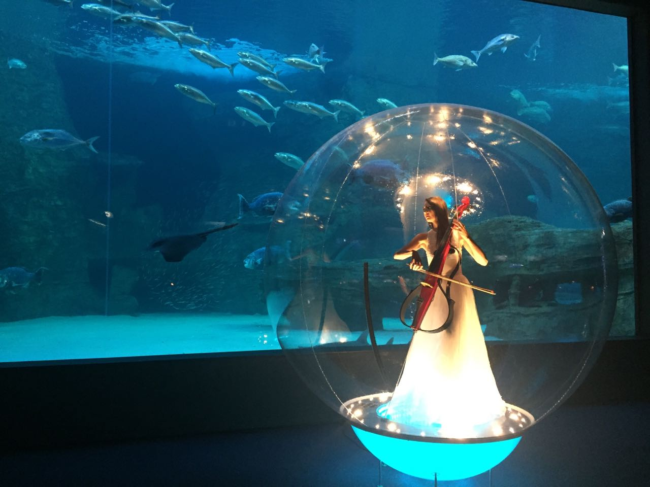 Host Your Unforgettable Event At The Two Oceans Aquarium